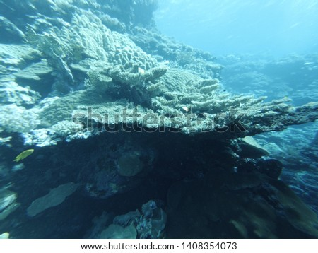 Underwater world of the Red Sea #1408354073