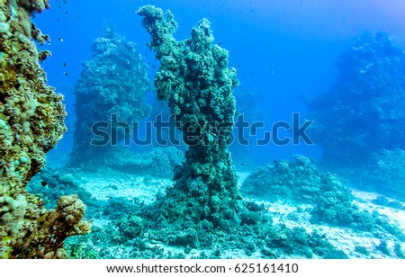 Underwater world plant rocks #625161410