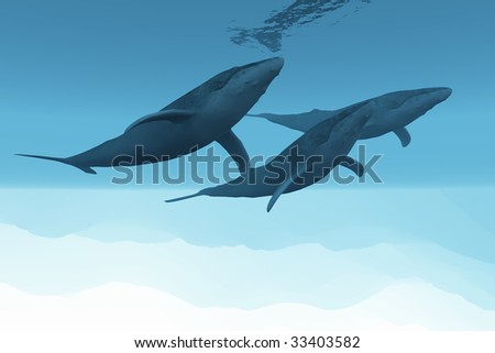 UNDERWATER WORLD - Three Humpback whales swim together in the vast open ocean.