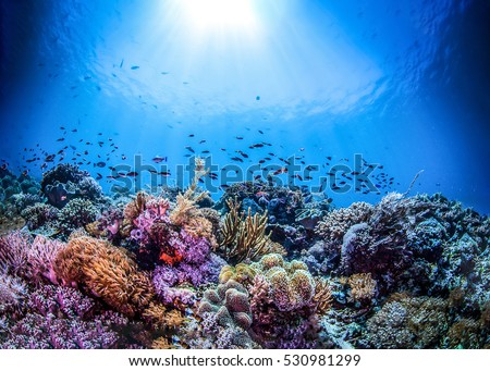Underwater world, underwater coral and fish shoal