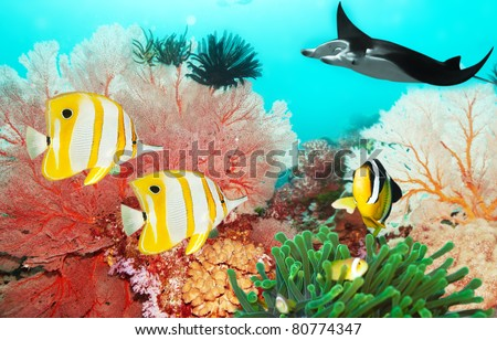 Underwater world with manta, coral reef and fishes