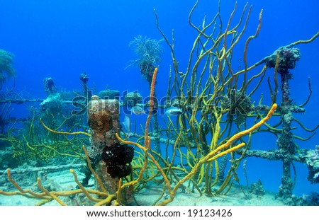underwater wreck of the price albert covered with coral