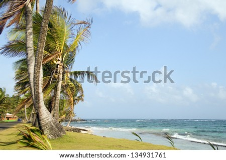 undeveloped Sally Peach beach palm trees on Caribbean Sea with native building Big Corn Island Nicaragua Central America