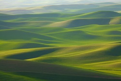 Undulating, rolling green wheat fields of the Palouse area of Washington state in spring