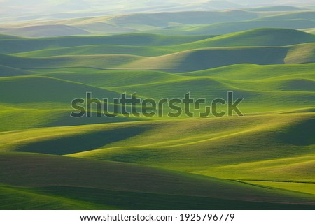 Undulating, rolling green wheat fields of the Palouse area of Washington state in spring  Stockfoto ©