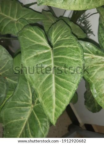 une plante dans une maisson algerien Photo stock ©
