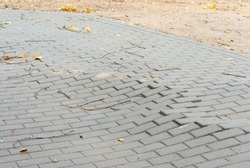 Uneven bricks floor around pine tree damaged by growth and careless