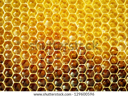unfinished honey in honeycombs