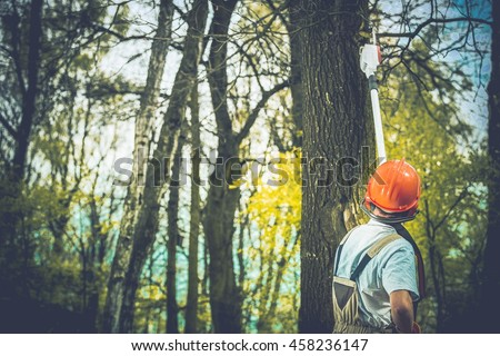 Unhealthy Tree Branches Cutting by Professional Forestry Worker. Stock photo ©