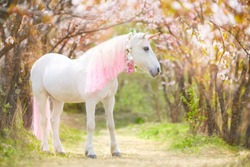 unicorn. photo of a snow-white unicorn with a pink and white mane and tail in a spring flowering garden, a magical garden.