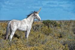 Unicorn Real white horn horse close up