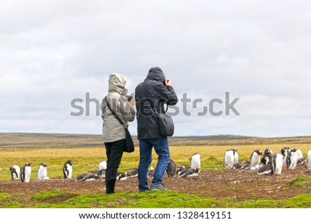 Unidentifiable Tourists taking Pictures at a Gentoo Penguin Colony.  Stanley, Falkland Islands.