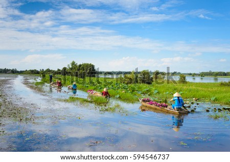 Unidentified famers are rowing on flooding lotus field in Mekong delta, Vietnam