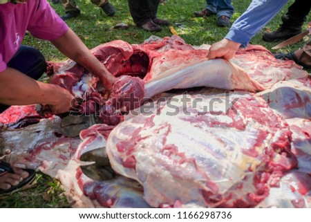 Unidentified Malay Muslims help each other in halal slaughtering part of a cow during Eid Al-Adha Al Mubarak, the Feast of Sacrifice or Qurban. #1166298736