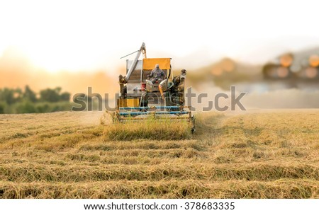 Unidentified man with Harvester machine to harvest rice field working in Thailand