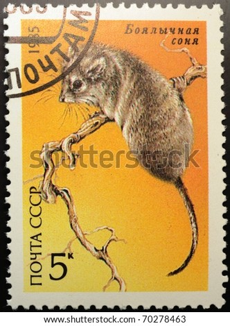 UNION OF SOVIET SOCIALIST REPUBLICS - CIRCA 1985: a 5 kopec stamp from the USSR (Scott 2008 cat. no. 5390) shows image of a desert dormouse (Selevinia betpakdalaensis), circa 1985 - stock photo
