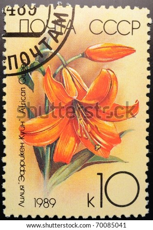 UNION OF SOVIET SOCIALIST REPUBLICS - CIRCA 1989: a stamp from the USSR (Scott 2008 catalogue number 5758) shows image of an African queen lily (Lilium), circa 1989
