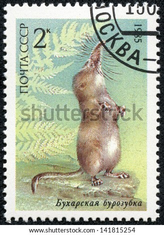 UNION OF SOVIET SOCIALIST REPUBLICS - CIRCA 1985: a stamp printed in USSR shows a Pamir shrew (Sorex bucharensis), from the endangered wildlife series, circa 1985