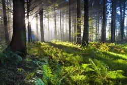 Union Wood sunrise 3