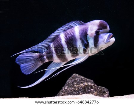 unique fish from depths of lake ...