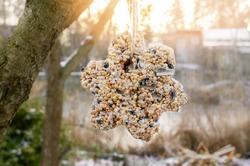 unique homemade manual bird feeder, winter garden. The bird feeder in the shape of a star formed from different types of grains. Protection of wild birds in nature during the cold season