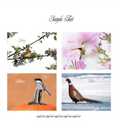 Unique poster or print design featuring four different species of birds in each season on white with copy space.  Each individual full sized image is in my portfolio.