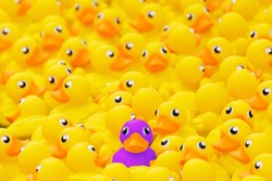 Unique purple toy duck among many yellow ones. Standing out from crowd, individuality and difference concept