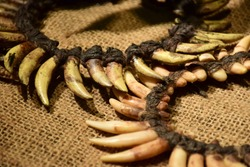 Unique tooth necklace from animal. Rope made from plant  by hand made