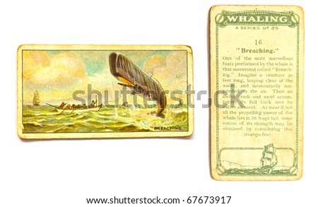 UNITED STATES OF AMERICA - CIRCA 1970: A Postcard printed in the United States shows image whale breaching out of the water, circa 1970