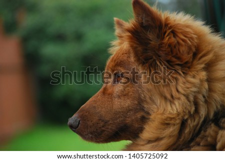 Unknown breed of Brown dog  #1405725092