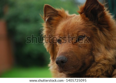 Unknown breed of Brown dog  #1405725095