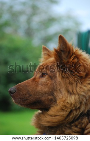 Unknown breed of Brown dog  #1405725098