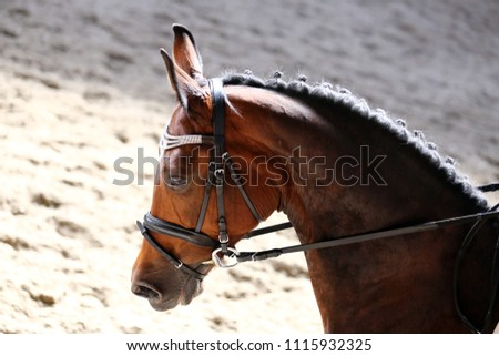 Unknown contestant rides at dressage horse event in riding ground. Head shot closeup of a dressage horse during competition event #1115932325