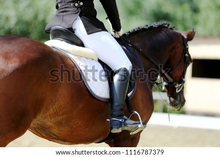 Unknown contestant rides at dressage horse event in riding ground. Head shot closeup of a dressage horse during competition event #1116787379