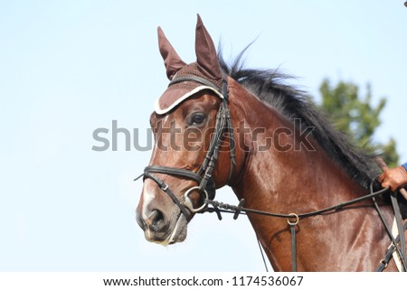 Unknown contestant rides at dressage horse event in riding ground outdoor. Headshot close up of a dressage horse during competition event outdoors. #1174536067