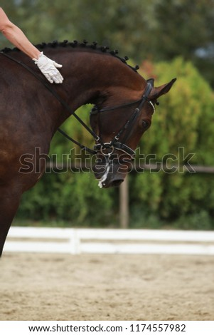 Unknown contestant rides at dressage horse event in riding ground outdoor. Headshot close up of a dressage horse during competition event outdoors. #1174557982