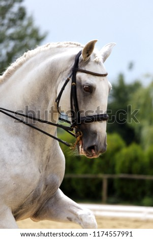 Unknown contestant rides at dressage horse event in riding ground outdoor. Headshot close up of a dressage horse during competition event outdoors. #1174557991