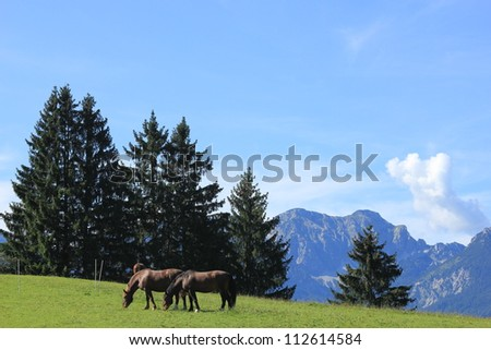 Unleashed horses grazing  in Bavarian Alps