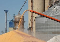 Unloading corn from an auger into a pile at a grain elevator