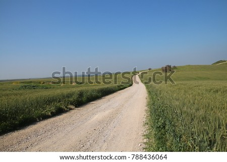 Unpaved road in a green wheat field. On a sunny spring day, blue sky background. Copy Space #788436064