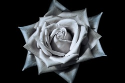 unreal white rose on black background
