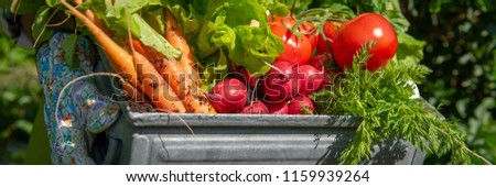 Unrecognizable female farmer holding crate full of freshly harvested vegetables in her garden. Homegrown bio produce concept. Sustainable living banner. #1159939264