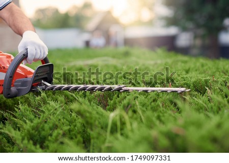 Unrecognizable male gardener cutting hedge. Close up of worker in gloves tidily shaping top of big green bushes using red and black electric trimming machine. Concept of work, gardening. ストックフォト ©