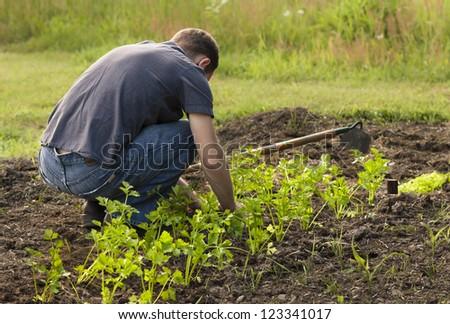 Unrecognizable Man Planting a Garden.