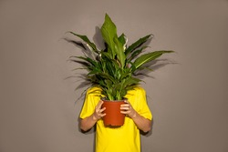 Unrecognizable people boy teenager young man hid behind pot with home flower with large green leaves. Obscured Face