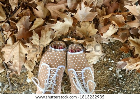 Unrecognizable person in colorful quirky shoes and fallen autumn leaves. Top view. Stock fotó ©