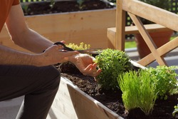 unrecognizable person picking fresh herbs from a raised bed on a balcony