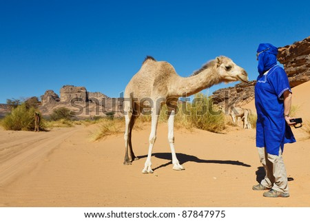 Unrecognizable tourist encounters a camel while on desert safari in the Sahara, Libya