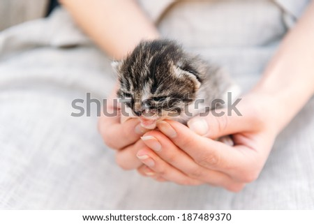 Unrecognizable woman is holding fluffy little kitten