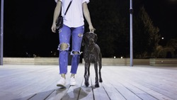 Unrecognizable young woman wearing jeans and a T shirt is walking with her big black dog in a park on a summer night. A front view. Tracking real time medium shot